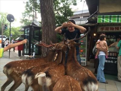 【トゥギャッチ】奈良の「鹿渋滞」はなぜ起きた? 実際に調べてみた